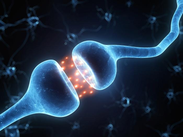 synapse.jpeg